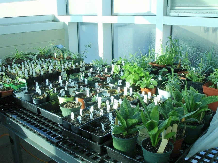 2017 Young Sprouts Native Plant Sale Master Gardeners Of Greene County